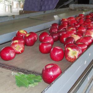 Walker's Apples