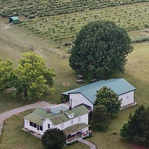 Hickory Hill Vineyard