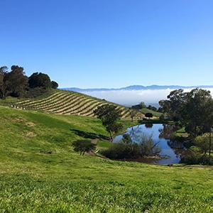 Cooper-Garrod Estate Vineyards