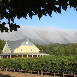Altamura Winery & Vineyards