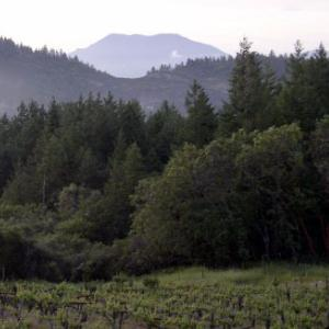 Ritchie Creek Vineyard