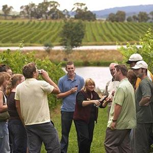 Wine & Dine Tours