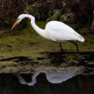 Woodbridge Ecological Reserve (Isenberg Crane Reserve)