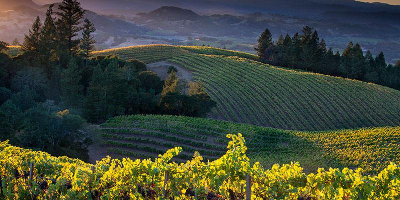 Ferrari Carano Vineyards Amp Winery Healdsburg Ca