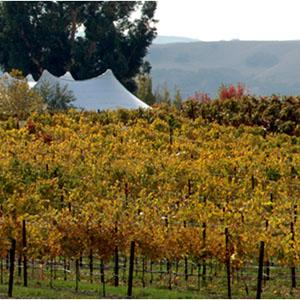 Garre Vineyard and Winery