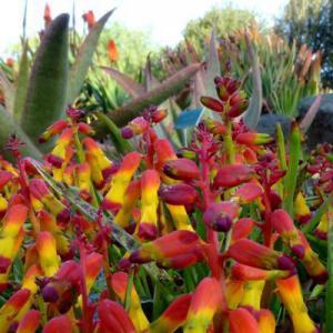 San Luis Obispo Botanical Gardens