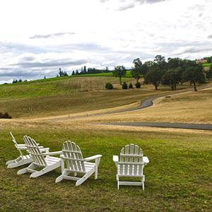 Cellar Door Wine Tours