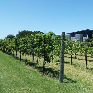 Texas Wine Tours
