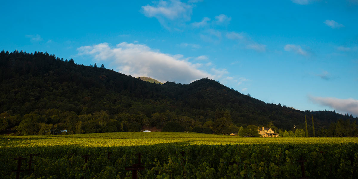 Staglin Family Vineyard Rutherford Ca Napavalley Com