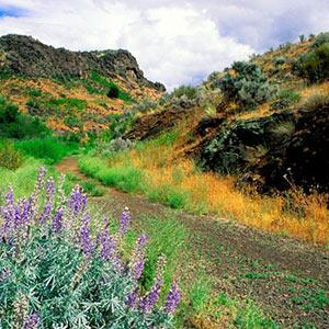 Cowiche Canyon Trail