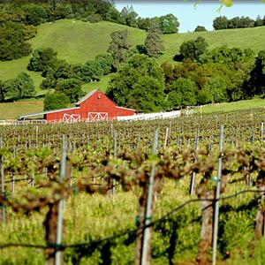 Courtwood Wine Tasting Tours